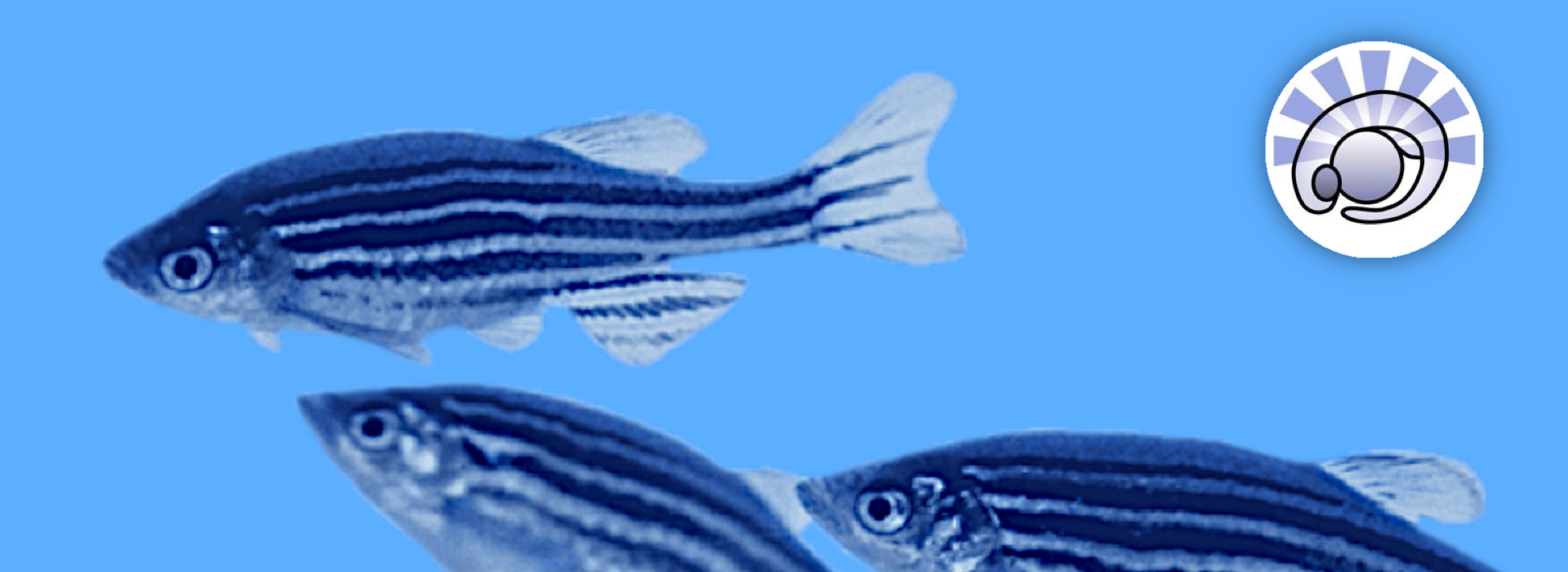 European Zebrafish Resource Center (EZRC)
